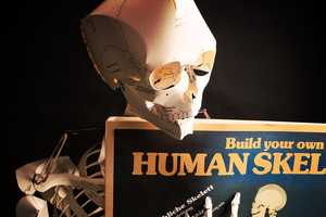 Learn About the Humand Body When You Build Your Own Skeleton