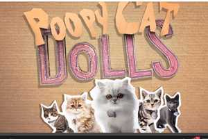 The Stars of Poopy Cat Dolls Exchange Purrs for a Litter Box