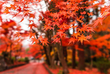 Vibrant Seasonal Landscape Photography - Takk Bulkington Captured the Beauty of His Japanese Home
