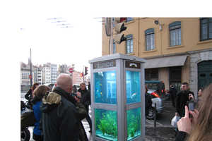 Benedetto Bufalino and Benoit Deseille Craft Fishy Telephone Booths