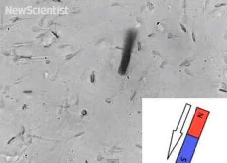 Robotic Fertilization Aids - German Scientists Created the First Remote-Controlled Cyborg Sperm