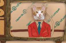 Feline News Anchor Videos