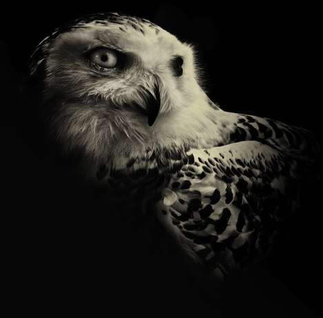 Moody Animal Portraits - Wildlife by Alex Teuscher Captures the Serious Side of Nature
