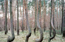 Comparative Treescape Captures