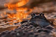 Glistening Frog Portraits