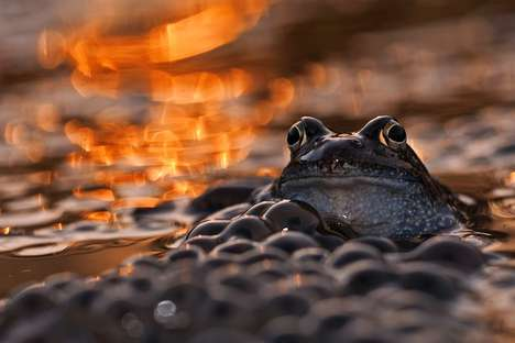 Glistening Frog Portraits - Photographer Lukasz Bozycki Captures Amphibians in a Golden Light