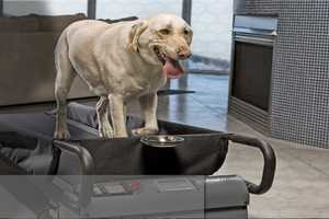 The DogTread Treadmill Allows Dogs to Work Out