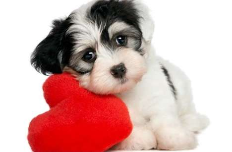 Romantic Canine-Centered Getaways - The 'Canine Be Mine' Valentine's Day Package is Puppy Perfect