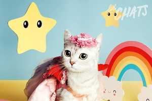 This Cat-Themed Photography Portrays Professional Felines