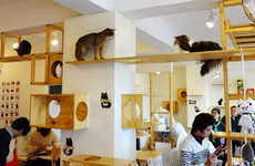 Feline-Focused Coffee Shops - The First North American Cat Cafe is Prowling Up in Montreal, Canada