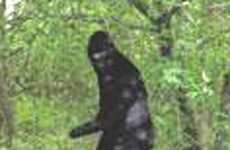 Capitalizing on Bigfoot - $1 Million Sasquatch Photo Challenge