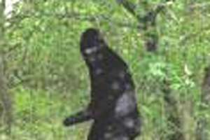 $1 Million Sasquatch Photo Challenge