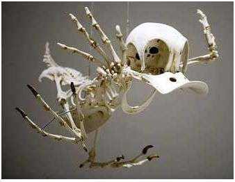 Skeletons of Cartoon Characters