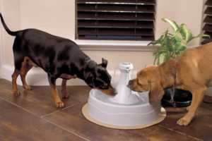 The Drinkwell 360 Pet Fountain is as Elegant as It is Useful