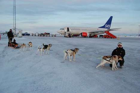 Dog Sled Taxi Services - The Kirkenes Snowhotel in Norway Has Introduced a Dog Sled Taxi
