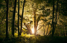 Illuminated Forest Photography
