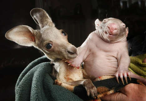 Aussie Animal Pair Photography - These Adorable Animals Became Best Friends After Being Rescued
