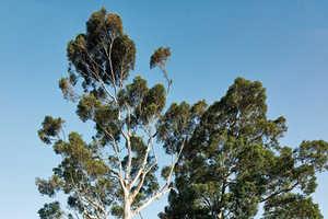 The H-Shaped Karri Loop House Bends & Raises Itself Around Three Trees