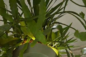 The Bucket Lights Let You Hang Plants While Illuminating a Room