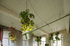 Beaming Potted Plants