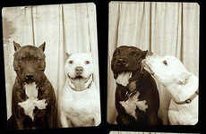 Canine Photo Booth Photography - Lynn Terry Captures Different Dogs in a Lovely Photo Booth Series