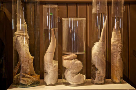 Salacious Phallic Museums - The Icelandic Phallogical Museum Holds a Casting Call