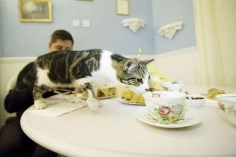 Comfortably Relaxing Cat Cafes - Lady Dinah's Cat Emporium is Europe's First Cat Cafe