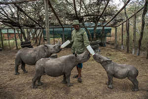 Photographer Documents Illegal Poaching Efforts in Kenya