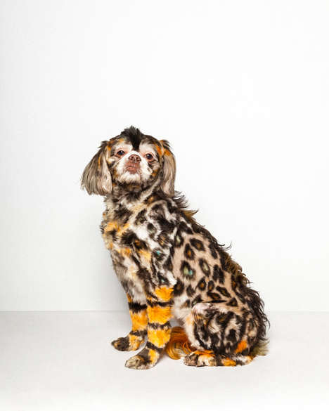 Colorful Primped Fur Photography - Paul Nathan Captures the World of Competitive Dog Grooming