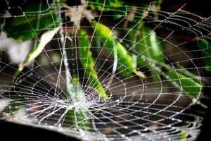 Synthesized Spider Silk by AMSilk is Ready for Commercial Usage