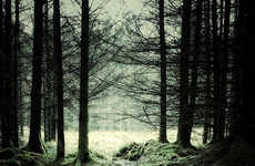 Forested Landscape Photography