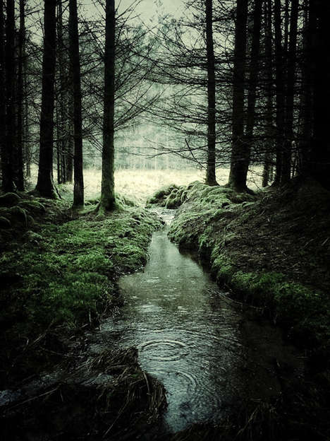 Forested Landscape Photography - Glen Orchy and Glen Etive by Julian Calverley is Enchanting