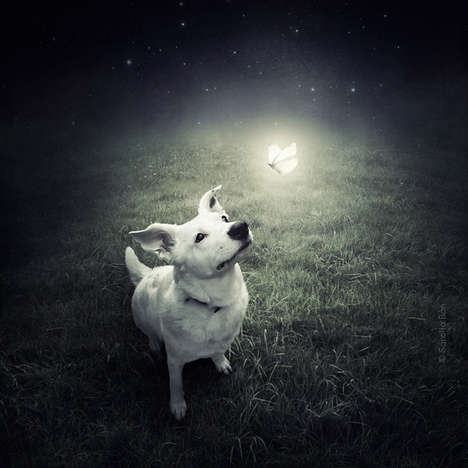 Surreal Shelter Animal Photography - Sarolta Bán Snaps Shelter Animals to Help Find Them a Home