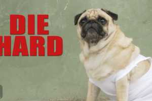 'The Pet Collective' Revamped 'Die Hard' with Pugs