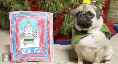 10 Pet Collective Parodies - From Feline News Anchor Videos To Pop Star Pooch Parodies