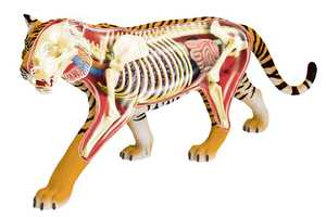 4D Vision Has Created Educational Anatomical Models of Various Animals