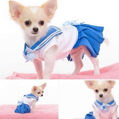 Galactic Pet Cosplay Costumes - These Fan-Made Sailor Moon Dog Costumes are Too Cute