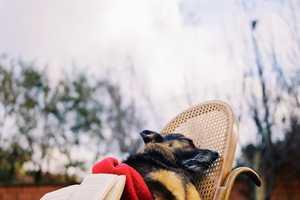 Emir Ozsahin's Deceased Animal Photography Series is Haunting