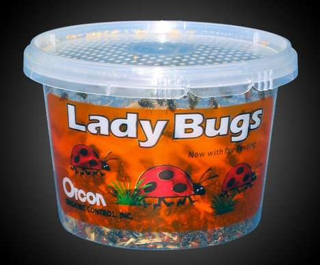 Bad Insect-Eating Bugs - This Alternative Pest Control Method Actually Uses Other Insects