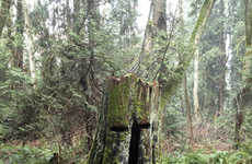 Watchful Forest Art Projects