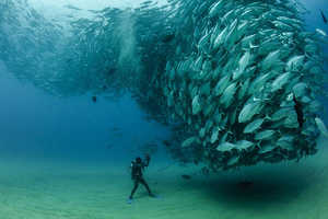 The Natural Beauty of a Fish Tornado is Captured by Octavio Aburto