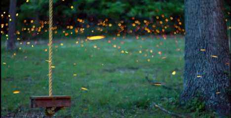 Swarming Insect Video Art - Time-Lapse Photos by Vincent Brady Capture the Art Made by Fireflies
