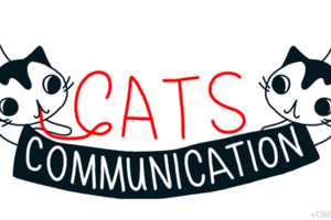 Cindy Suen Explains How Cats Communicate