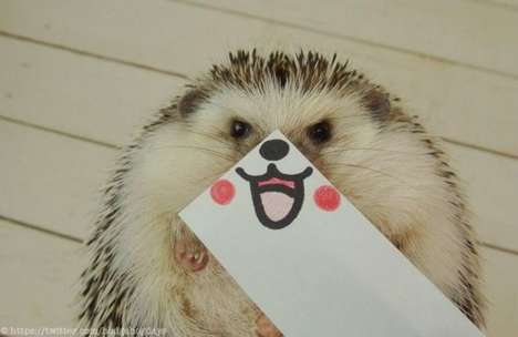 Expressive Hedgehog Photography - Marutaro the Hedgehog Will Win People Over in a Heartbeat