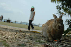 Okunoshima Island Has a Large Bunny Population