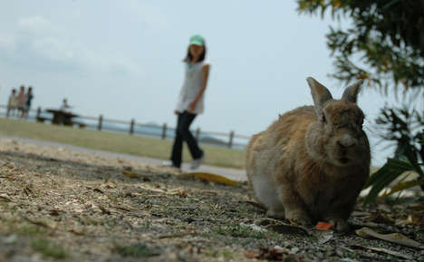 Bunny Infested Islands - A Rabbit Island May Be the Cutest Thing You