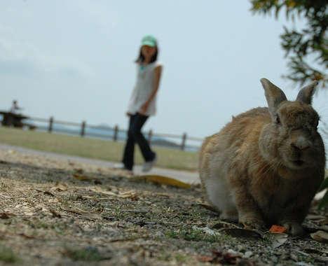 Overpopulated Bunny Islands