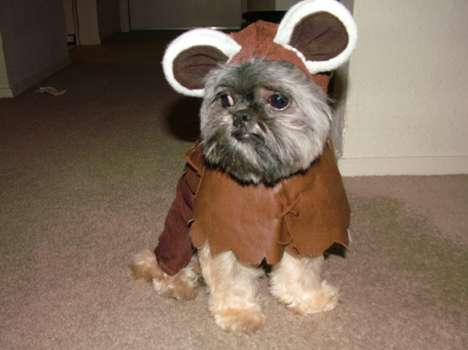 41 Crafty Pet Cosplay Ideas - From Sci-Fi Pooch Attire to Armoured Pet Costumes