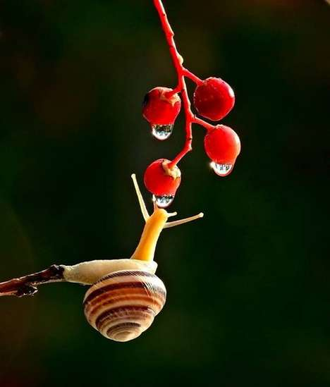 Macro Snail Photography - Vyacheslav Mishchenko Loves to Capture Sluggish Creatures