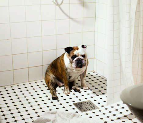 Candid Domesticated Doggie Portraits - This Lonely Dog Photo Series is Sweet and Intense